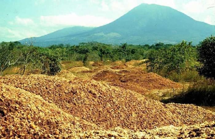 Floresta tropical que se desenvolveu devido à cascas de laranja 1