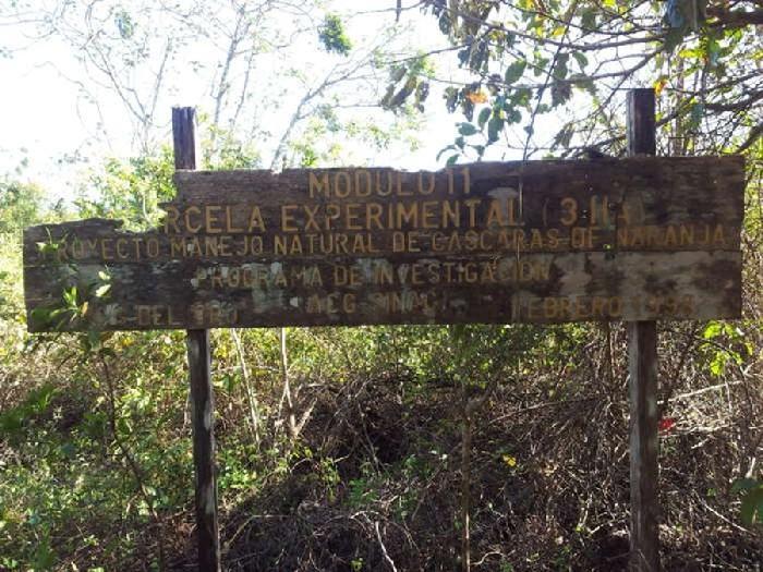 Floresta tropical que se desenvolveu devido à cascas de laranja 6