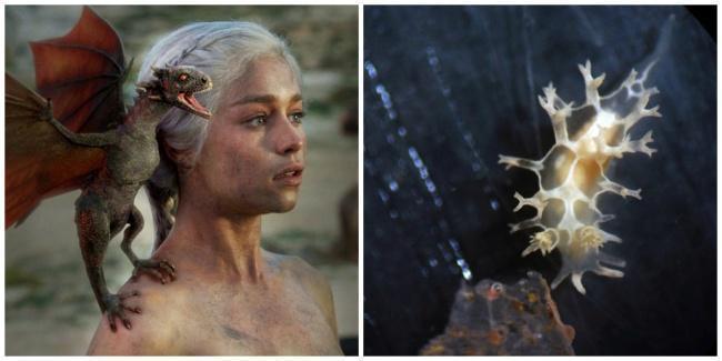 Daenerys e ao lado a lesma do mar