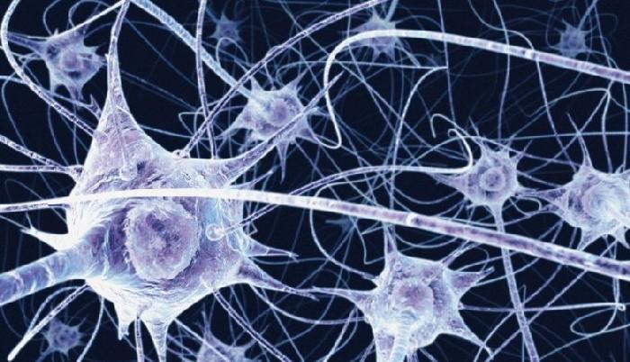 Conexões neurais do cérebro humano
