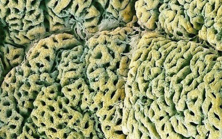 Corpo Humano - Fotos Microscópio (5)