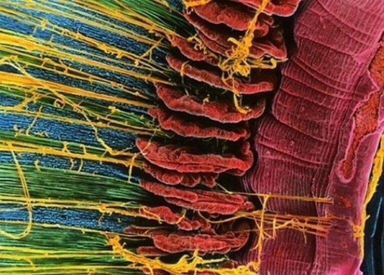 Corpo Humano - Fotos Microscópio (16)