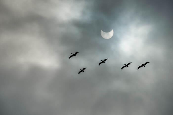 Eclipse Solar 2017 (17)