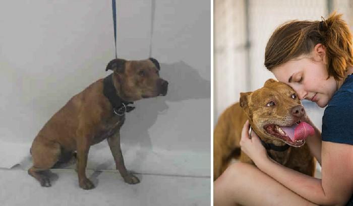 Foto amadora e profissional dos animais do abrigo 11