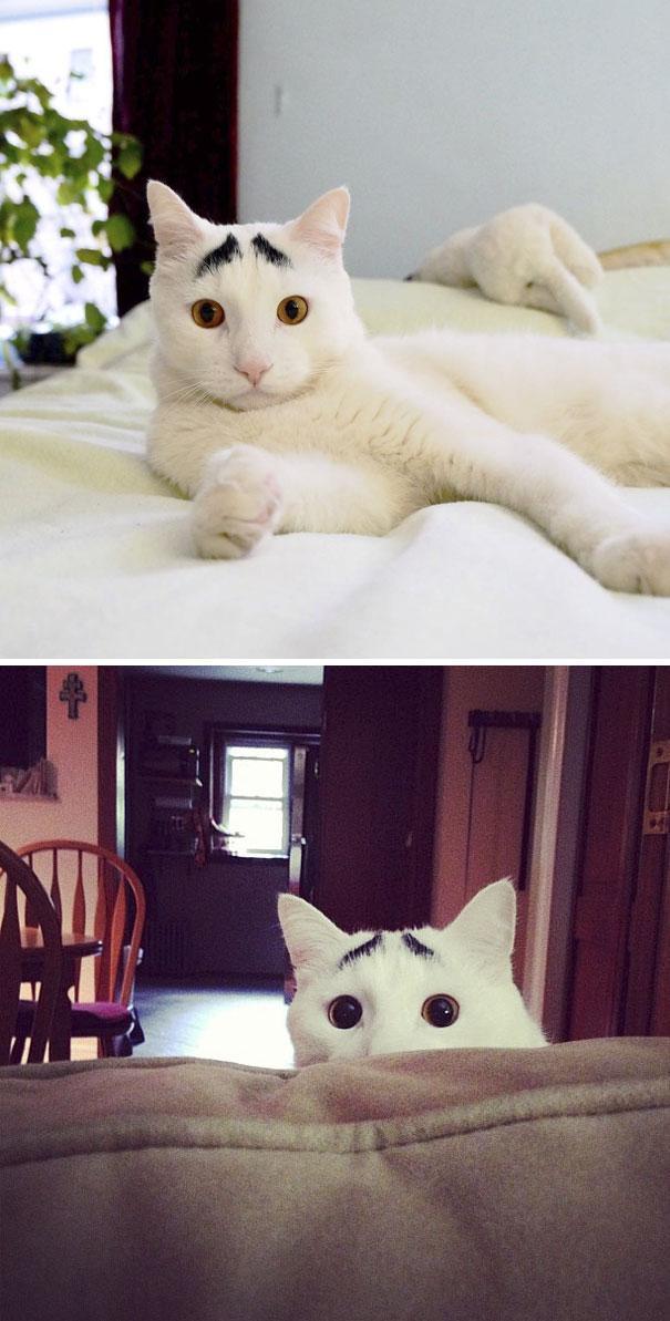 Gato com marca na pelagem 1