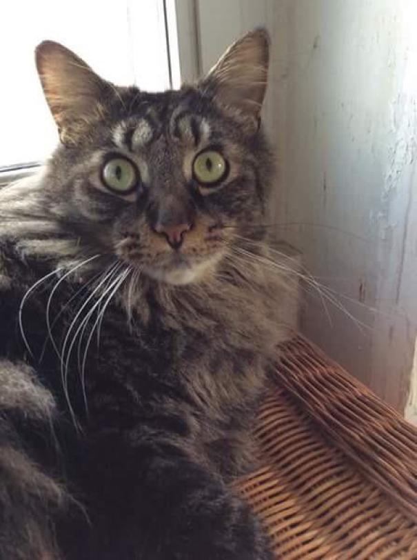 Gato com marca na pelagem 14