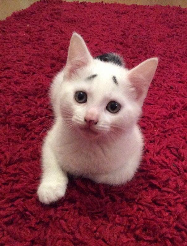 Gato com marca na pelagem 18
