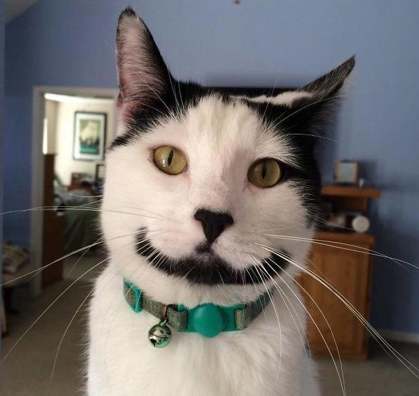 Gato com marca na pelagem 21