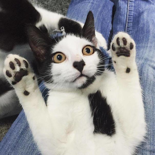 Gato com marca na pelagem 24