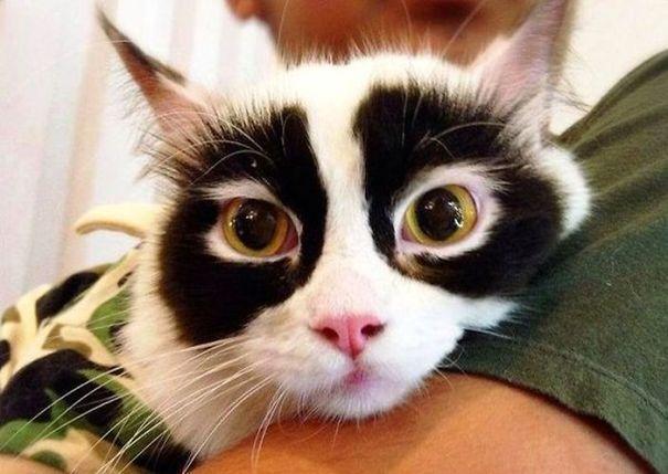 Gato com marca na pelagem 3