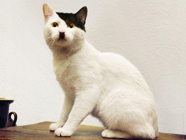 Gato com marca na pelagem 6