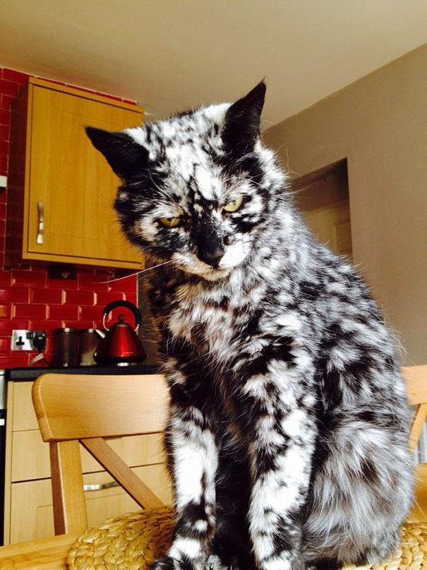 Gato com marca na pelagem 7