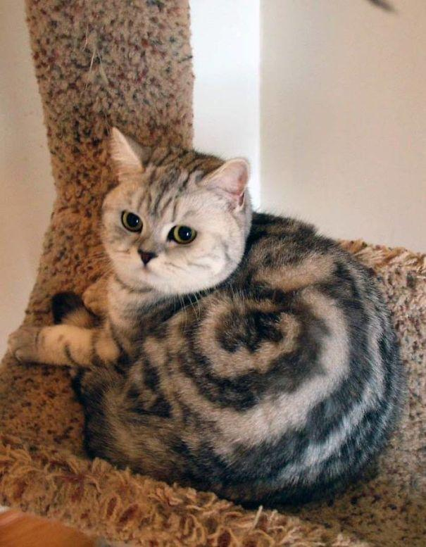 Gato com marca na pelagem 8