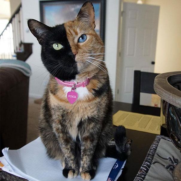 Gato com marca na pelagem 9