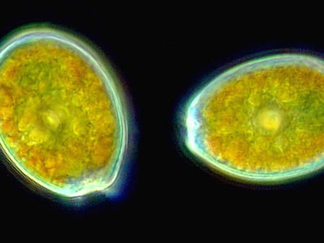 Mistérios encontrados nas profundezas do oceano 9