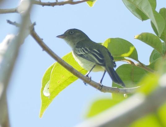 Novas espécies da Amazônia 4
