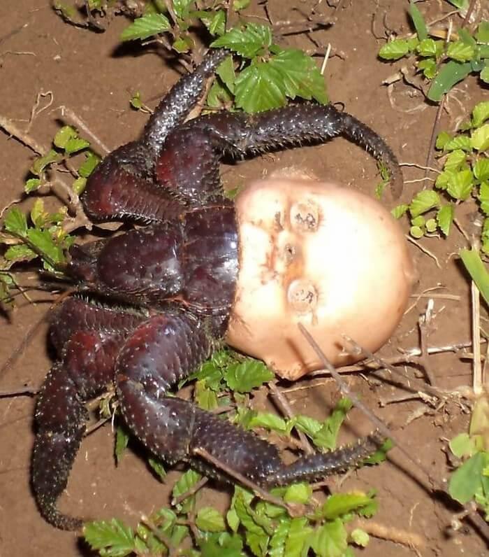 Natureza Assustadora (2)