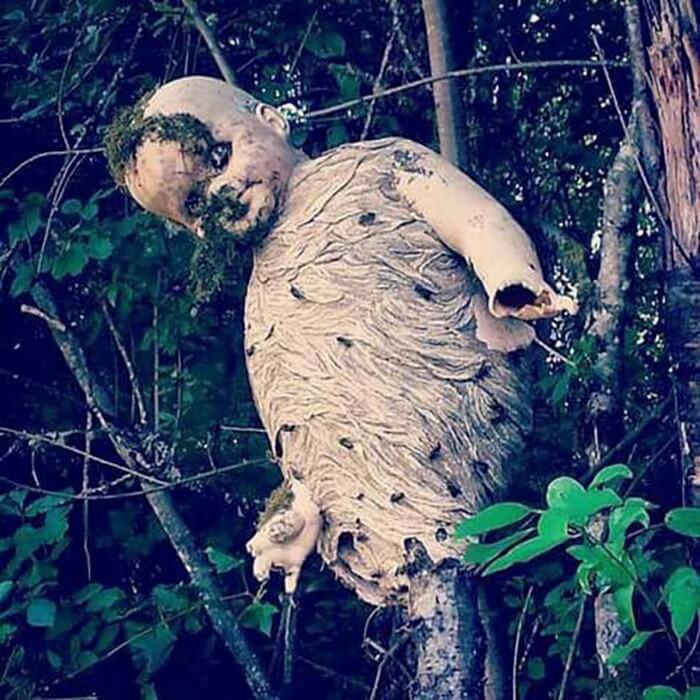 Natureza Assustadora (4)