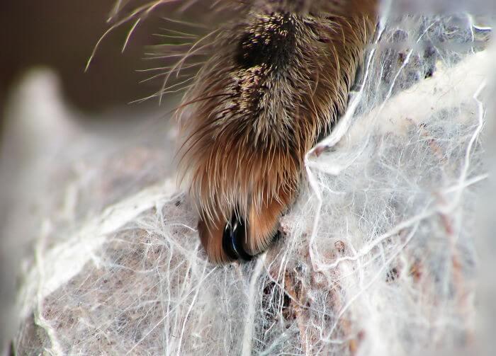 Pata de Aranha (18)