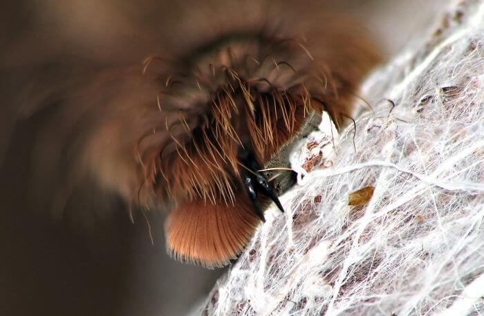 Pata de Aranha (11)