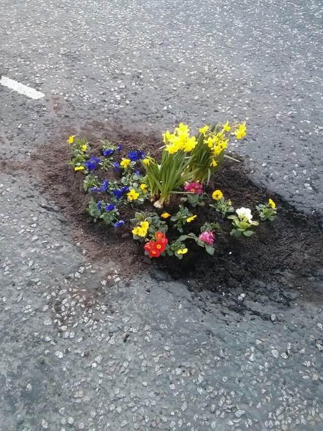 Plantar árvores em buracos (4)