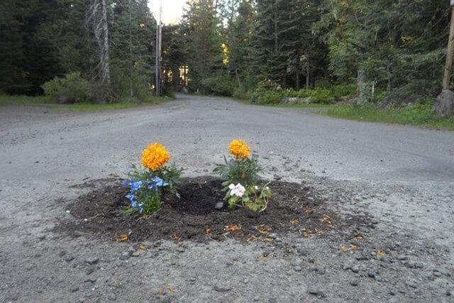 Plantar árvores em buracos (5)