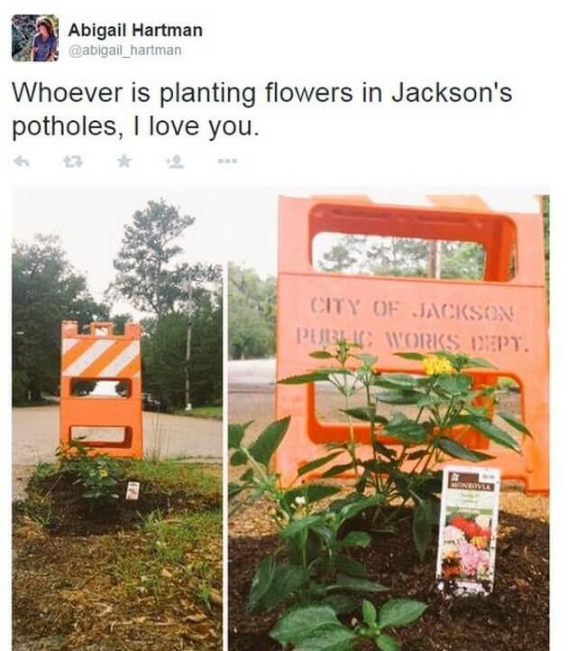 Plantar árvores em buracos (7)