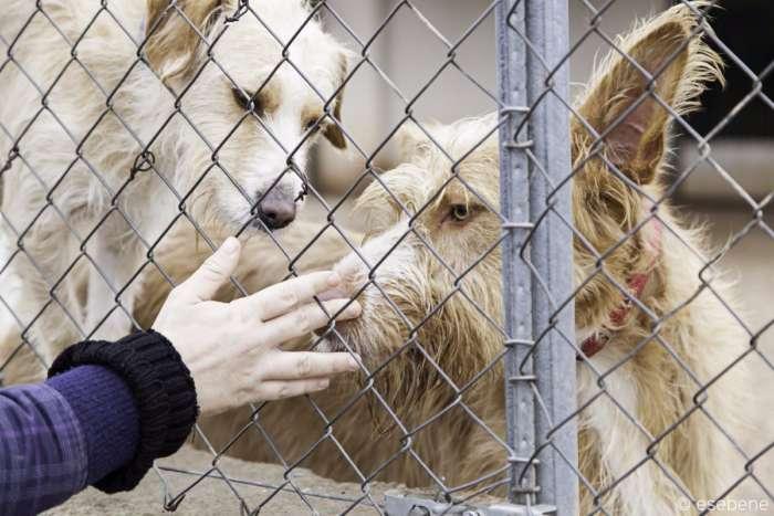 Califórnia exige que os animais vendidos sejam resgatados 2