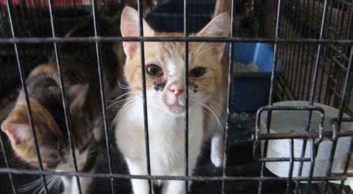 Califórnia exige que os animais vendidos sejam resgatados 4