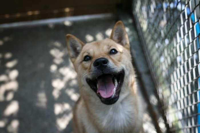 Califórnia exige que os animais vendidos sejam resgatados 3