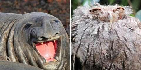 25 animais não muito fotogênicos que vão te fazer rir