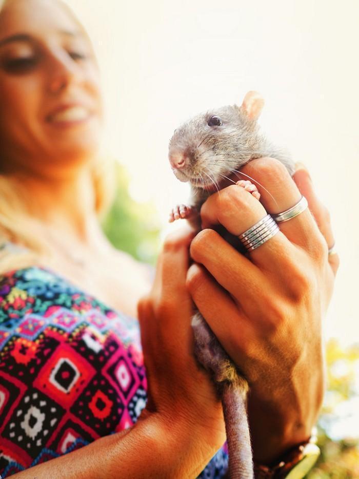Ratinhos de laboratório reagem à liberdade 14