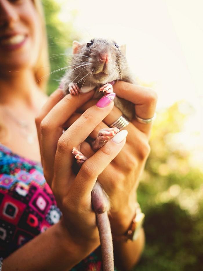 Ratinhos de laboratório reagem à liberdade 4