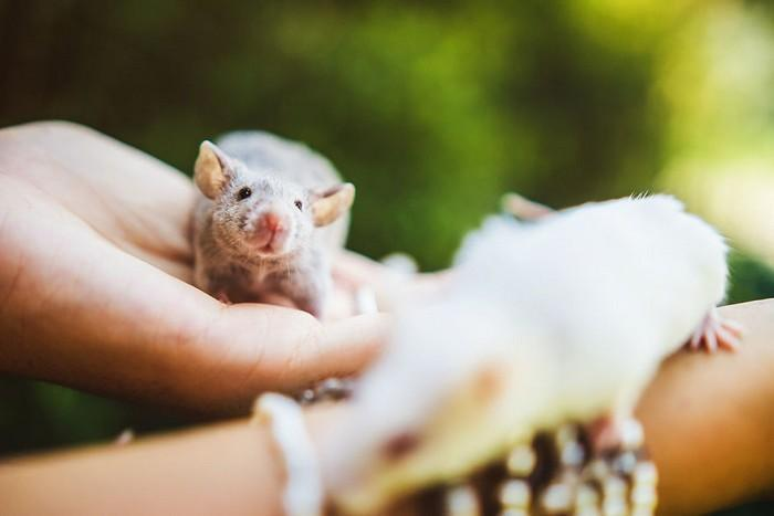 Ratinhos de laboratório reagem à liberdade 5