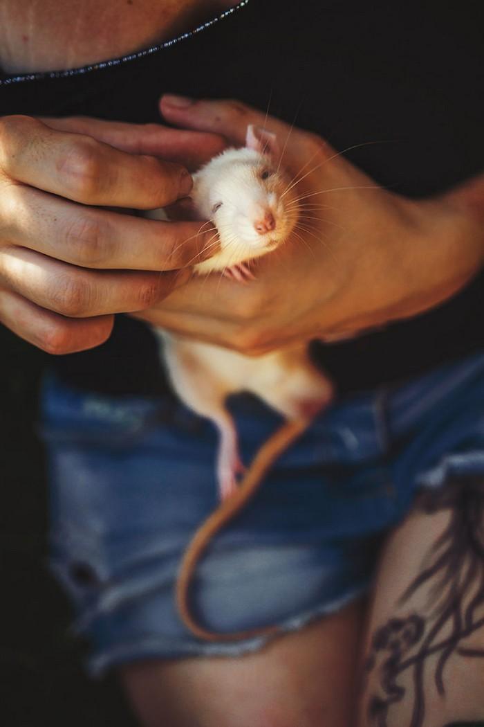 Ratinhos de laboratório reagem à liberdade 6