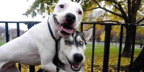 Estes cachorros inseparáveis mostram o significado de uma boa amizade