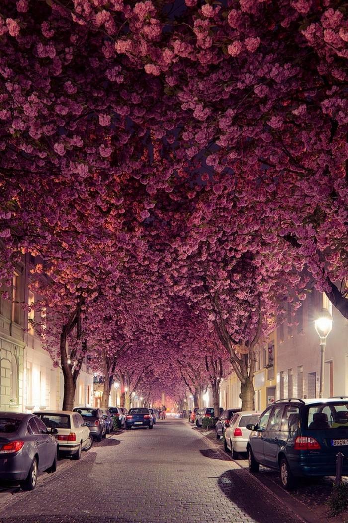 ruas bonitas morar (18)