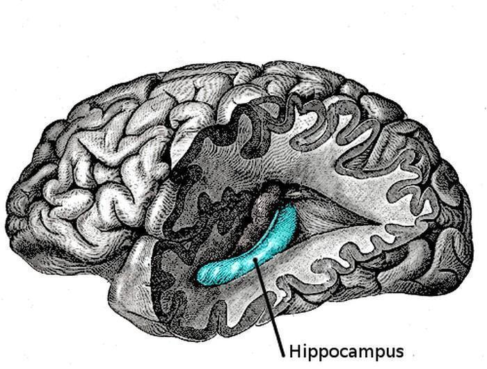 Esquecimentos tornam cérebro mais eficiente (5)