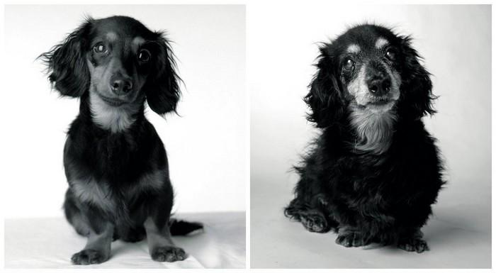 Antes e depois de cachorros velhinhos (9)