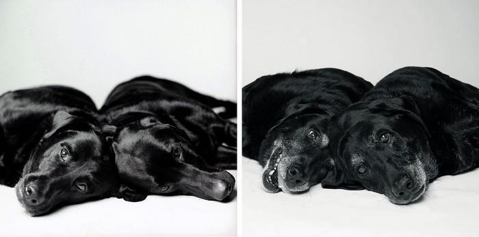 Antes e depois de cachorros velhinhos (7)