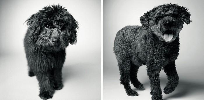 Antes e depois de cachorros velhinhos (4)