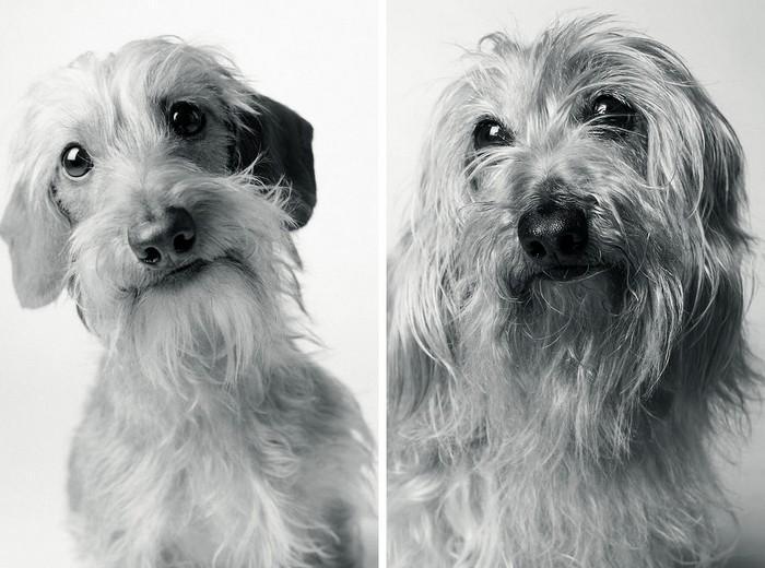 Antes e depois de cachorros velhinhos (3)