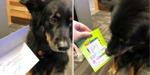 Este cão trabalhador recebeu um bônus de Natal pelo trabalho bem feito