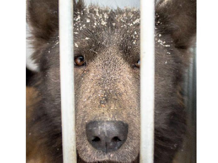 Cachorro cara de urso (3)