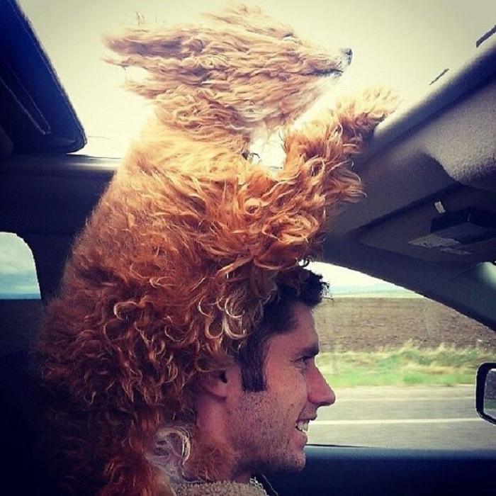 Cães sentindo o vento no carro (5)