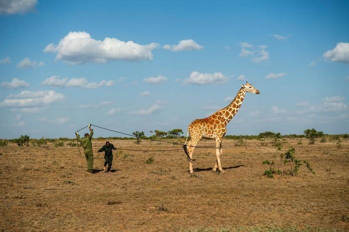 57 melhores fotos 2017 National Geographic (28)