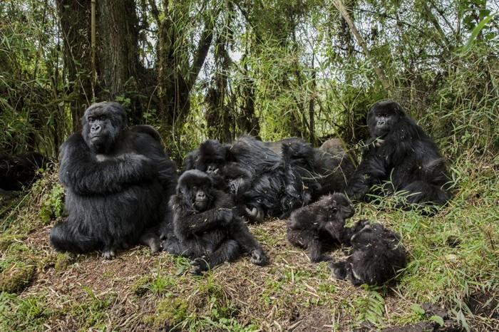 57 melhores fotos 2017 National Geographic (9)