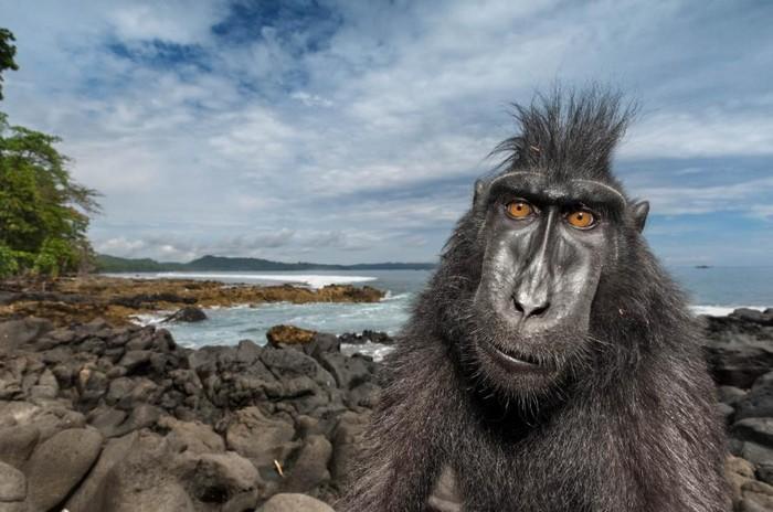 57 melhores fotos 2017 National Geographic (8)