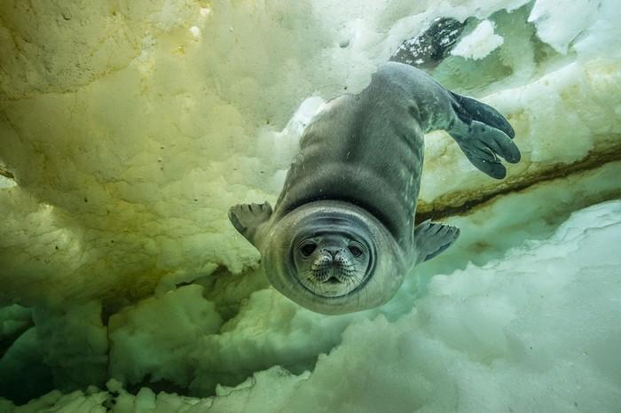 57 melhores fotos 2017 National Geographic (7)