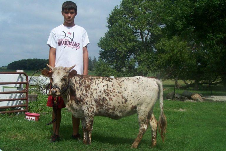 Mini Vacas (3)